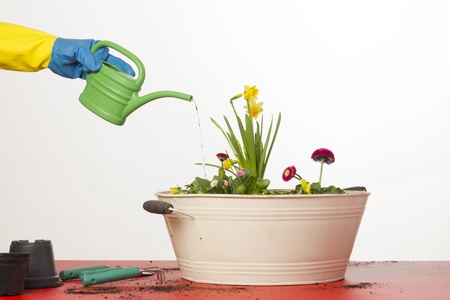 Watering flowers photo