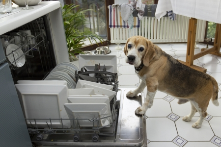 dishwasher: Dog licks dirty dishes out of the dishwasher Stock Photo