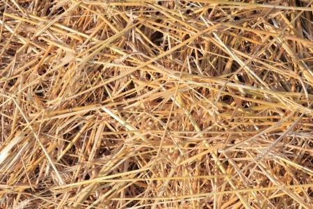 droog stro textuur, nuttig voor achtergronden