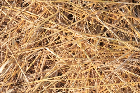 dry straw texture, useful for backgrounds Stock Photo - 10452980