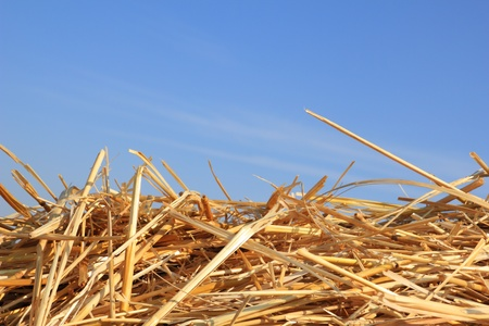 dry straw texture and blue sky, useful for backgrounds
