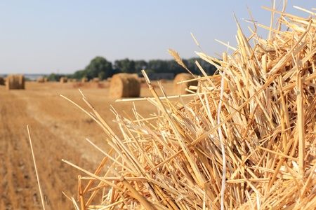 dry straw texture, blue sky and field, useful for backgrounds Stock Photo - 10677625