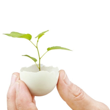concept, symbolizing new life or new initiative Stock Photo