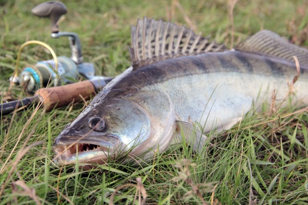 fishing catch on the grass and fishing gear photo