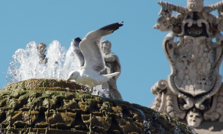 Gull with its wings raised in a fountain at the Vatican photo