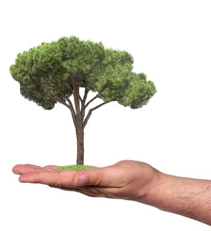 concept symbolizing the care of the forest or sell wood photo