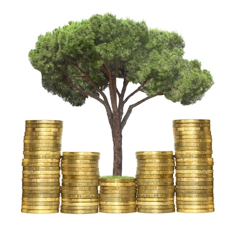 tree growing from coins, isolated photo