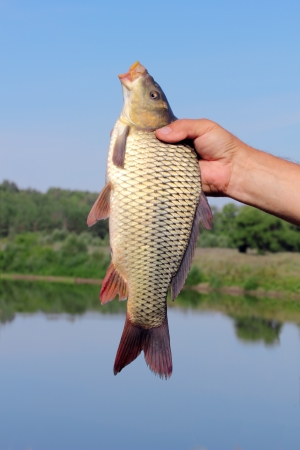 carp in the hand of fisherman against the sky and the river Stock Photo - 14814519