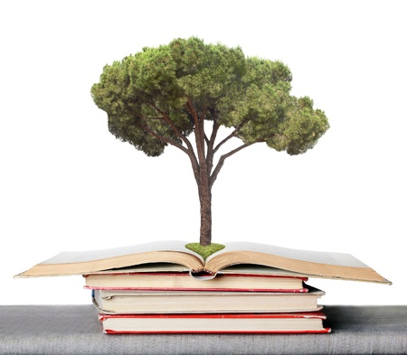 tree on the books symbolizing the germs of the knowledge obtained from books photo
