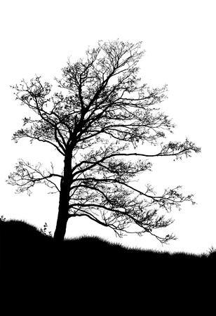 black and white forest: silhouette of a dead tree isolated on white