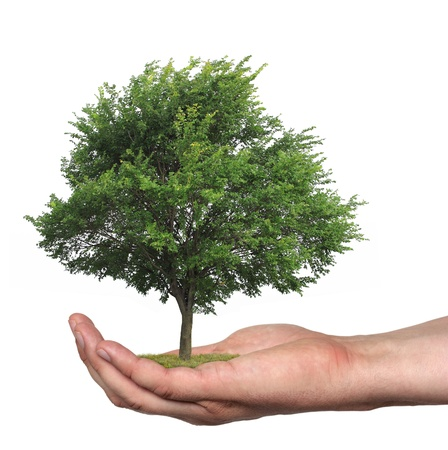 sustentabilidad: concepto que simboliza el cuidado del bosque o venta de madera