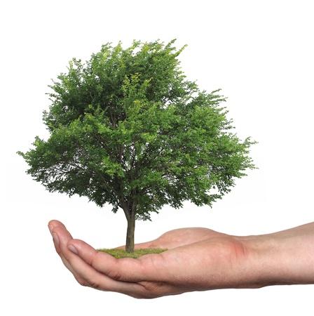 curare teneramente: concetto che simboleggia la cura della foresta o vendere legno Archivio Fotografico
