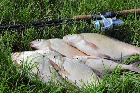 avocation: fishing catch on the grass and fishing gear
