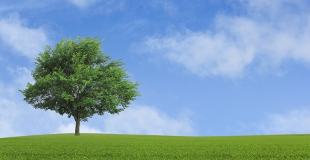 green lonely tree growing in a field Stock Photo