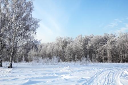 bosque con nieve: Parque de invierno en la nieve contra el cielo azul Foto de archivo