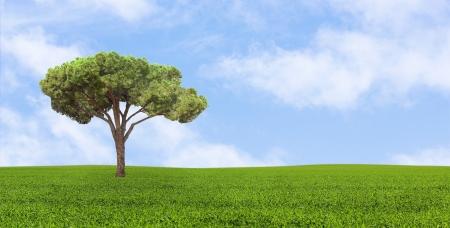 curare teneramente: albero che cresce solitario