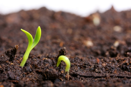 small green seedling in the ground photo