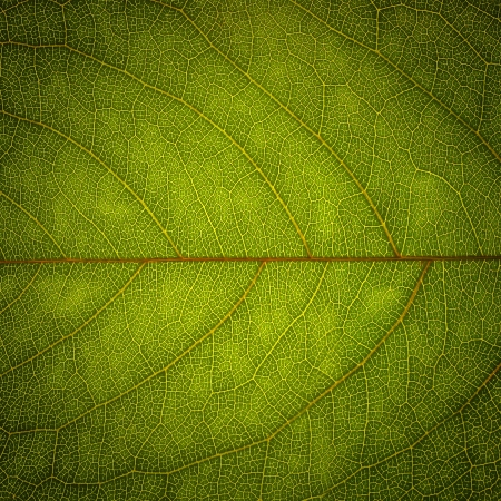 Abstract green leaf texture for background  photo