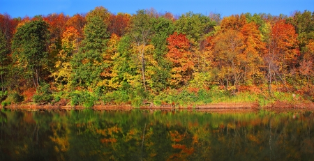 fall scenery: аutumn forest on the bank of the river and its reflection in the water