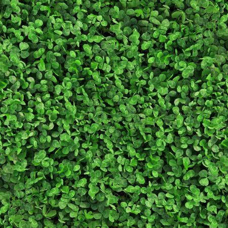 Green grass clover seamless texture photo
