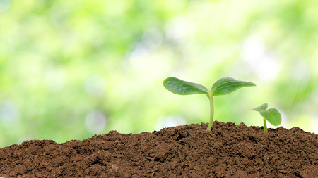 Small cucumber seedling over sunlight background photo