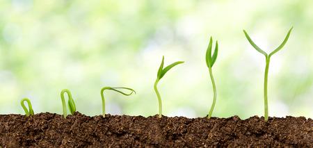 evolution: Plantas que crecen de la tierra - el progreso de Plantas Foto de archivo