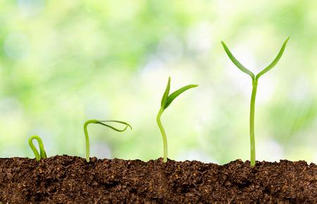 Pflanzen wächst aus dem Boden - Pflanze Fortschritt Standard-Bild