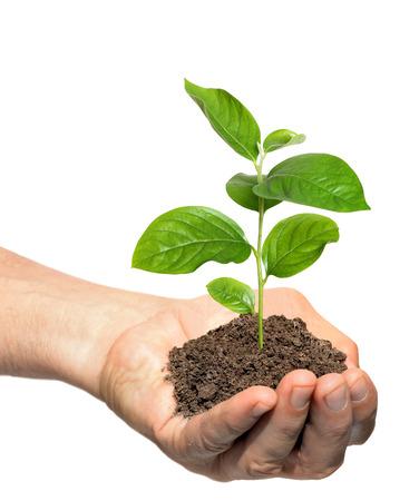 若いキュウリの苗木は、植物の世話を持っている手