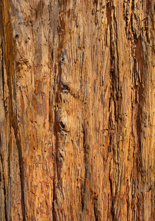 Close Up of Redwood Bark photo