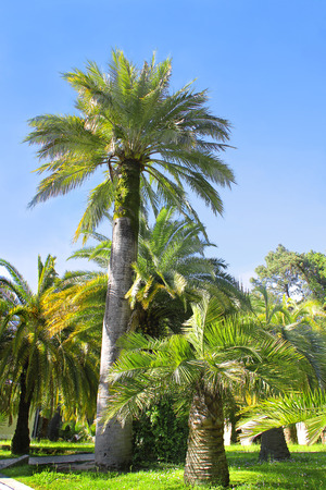 palm garden: Walkway in a beautiful Park with Palms Stock Photo