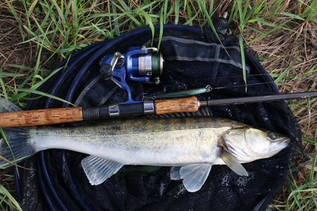fishing gear: fishing catch on the grass and fishing gear