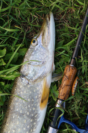 fishing catches: pike fishing catch on the grass and fishing gear Stock Photo