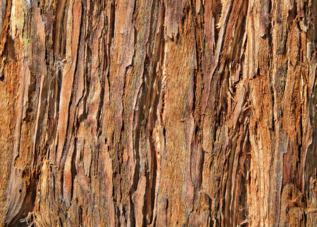 barks: Close Up of Redwood Bark Stock Photo