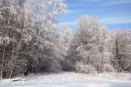 snowlandscape: landscape in snow against blue sky. Winter scene.