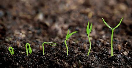 cherish: Plants growing from soil - Plant progress