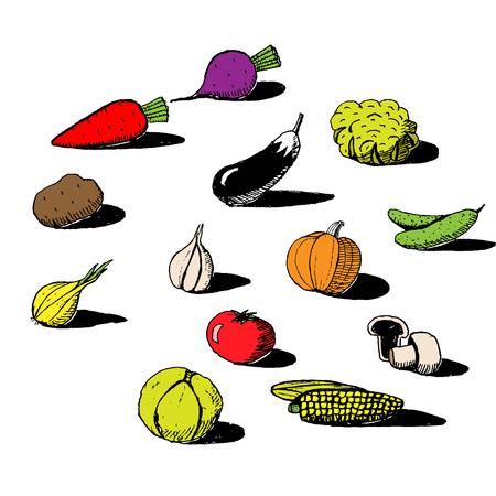 Set of handdrawn vegetables in sketch style