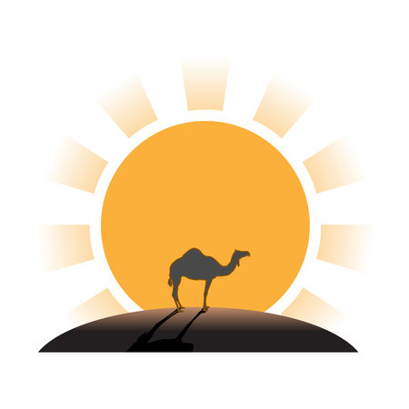 Silhouette of camel on sunset in desert