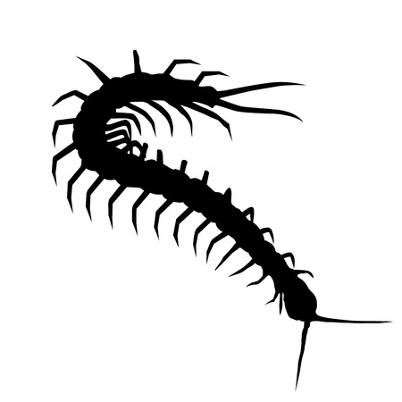 Silhouette of wriggling scolopendra - centipede outline