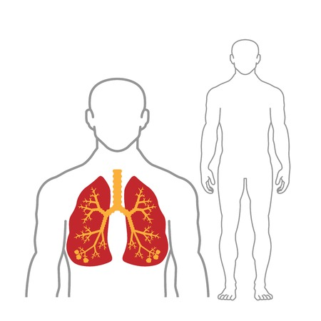 Lungs and human body outline on white background