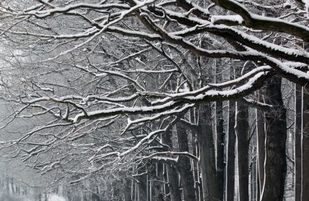 Black branches with white snow