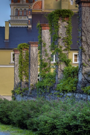 Palace pillars with green ivy Stock Photo