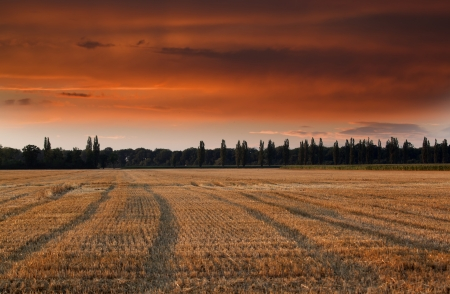 Field after harvest and red sky