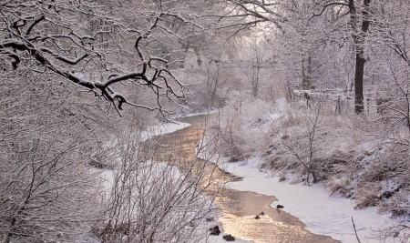 Beautiful winter landscape with river and ducks photo