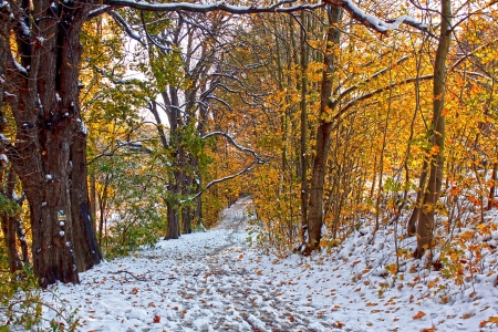 Two seasons - winter and autumn scene in the park  photo