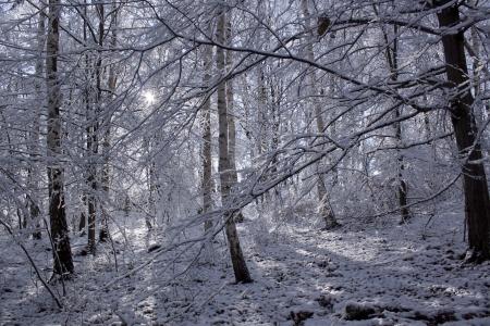 Winter wonderland  Stock Photo - 17515143