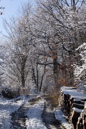 Winter wonderland Stock Photo - 17515123
