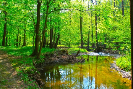 Beautiful mountain stream in spring forest  photo