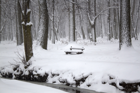 Winter landscape with alone bench photo