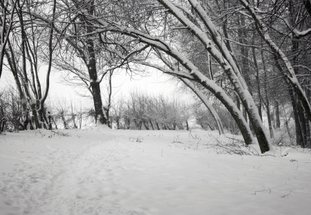 Winter landscape Foto de archivo