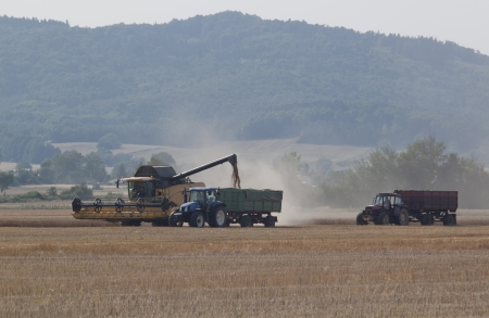 combine harvester on a wheat field photo